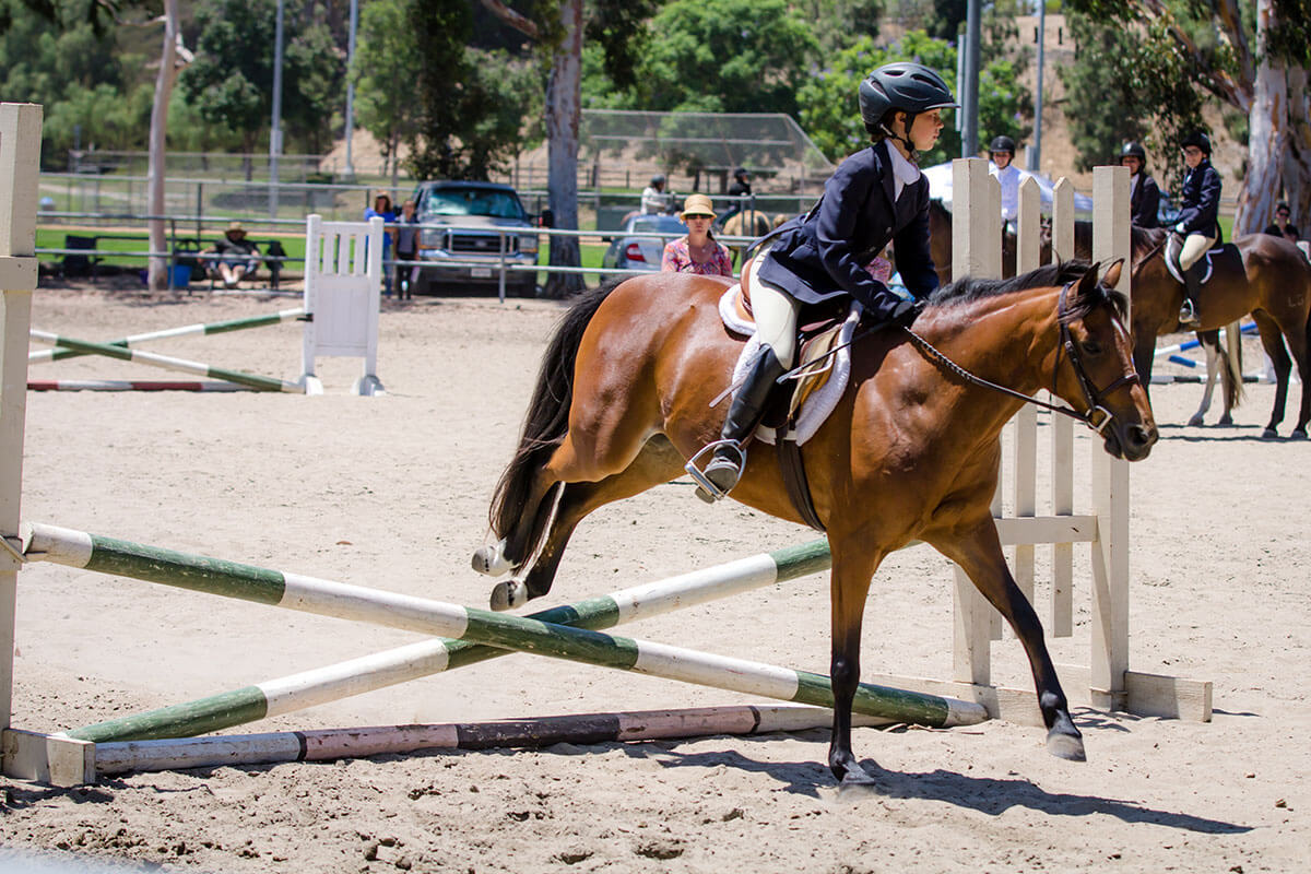 sunnyside-saddle-club-aug-2016-horse-show-gallery