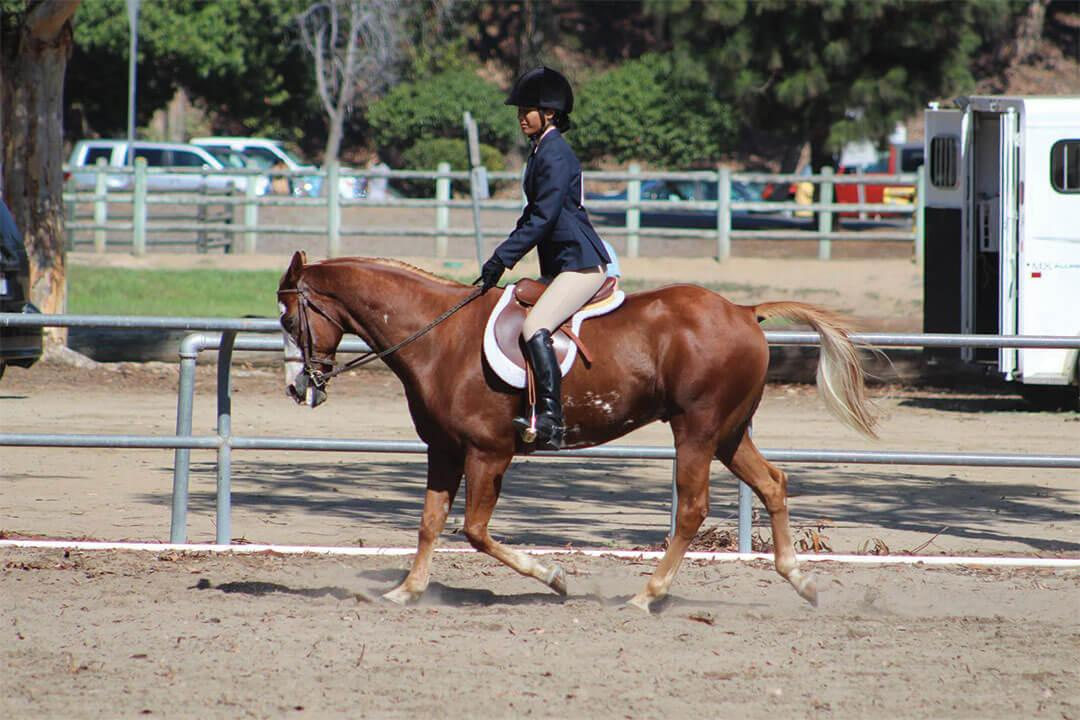 sunnyside-saddle-club-gallery1-2015