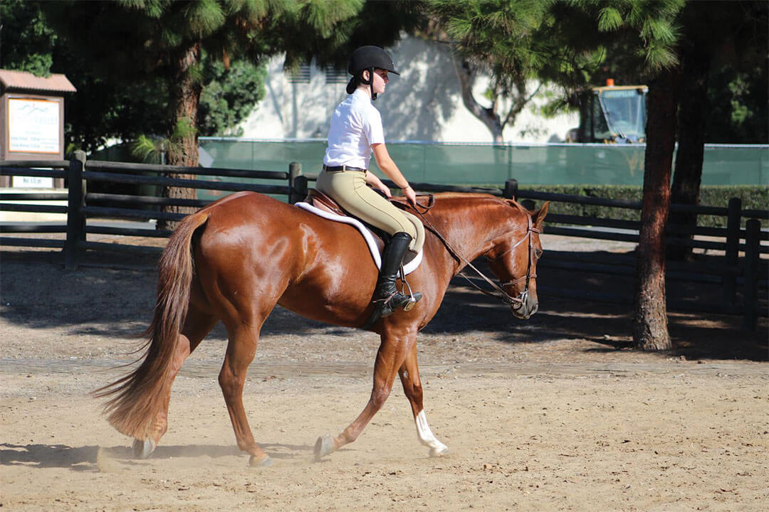 sunnyside-saddle-club-gallery7-2015